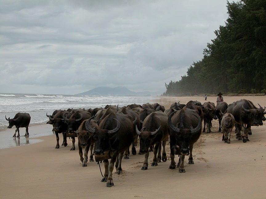 写真2: ビルマ南東部 タニンダイー管区 グウェ海岸/Dawei Coast, Tanintharyi Division,Southeast Burma