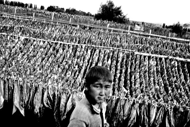 2009_Kazakhstan_Tobacco2