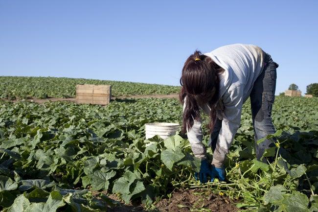 United States: EPA Should Ban Toxic Pesticide