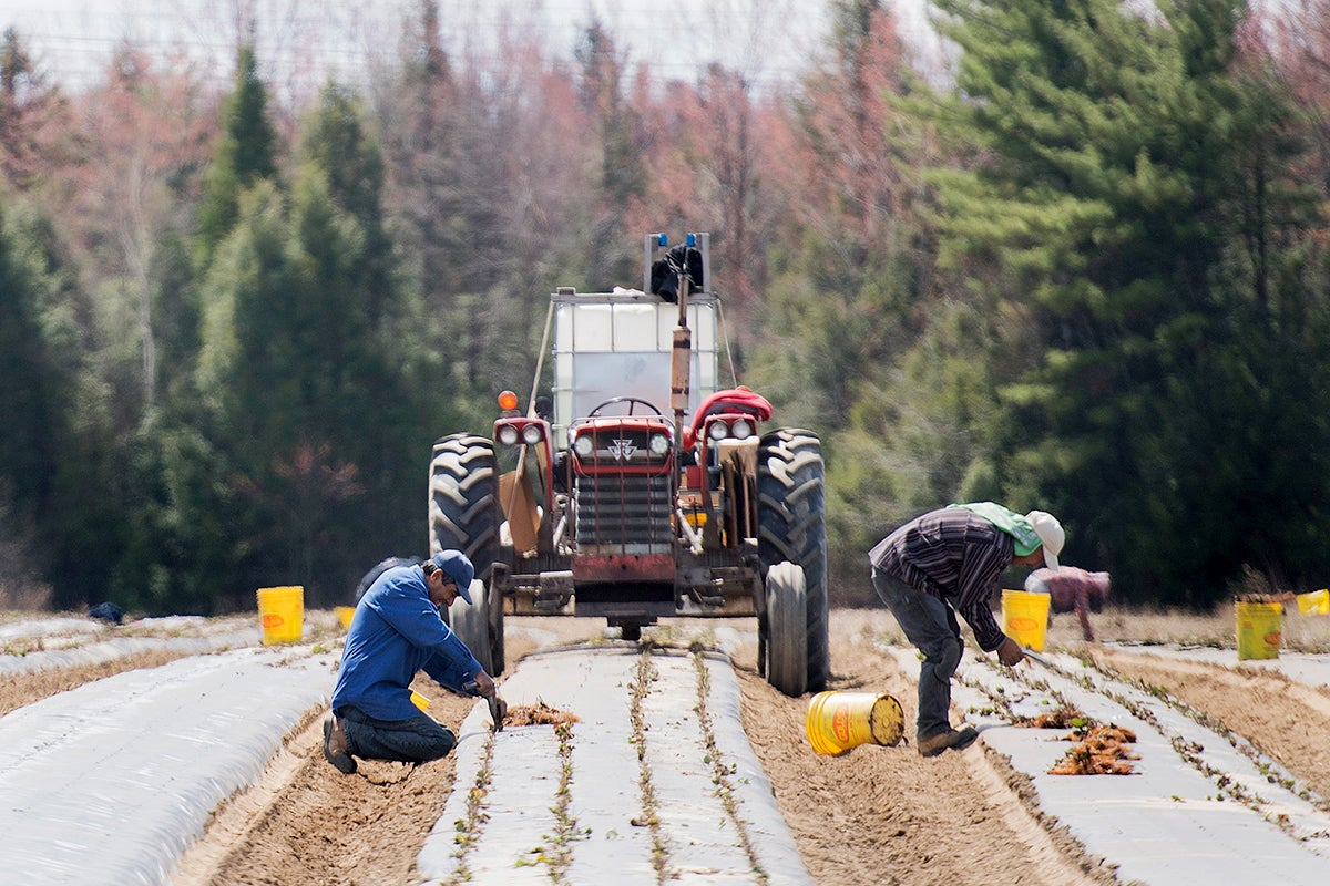 Canada Bans Use of Toxic Pesticide