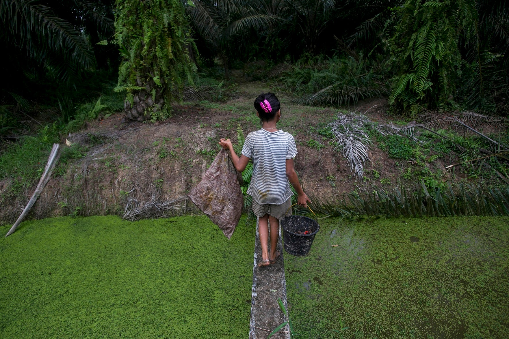 Indonesia: Expanding Palm Oil Operations Bring Harm