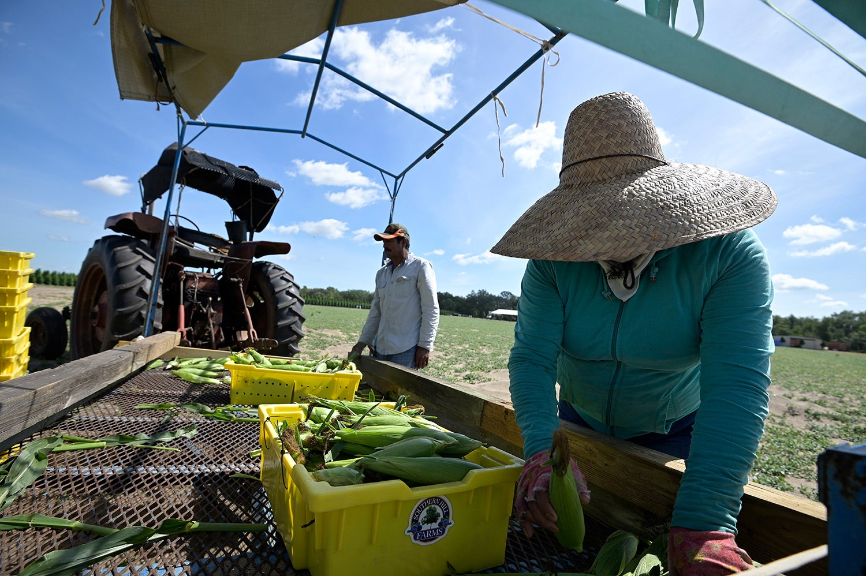 US Bans Toxic Pesticide on Food Crops