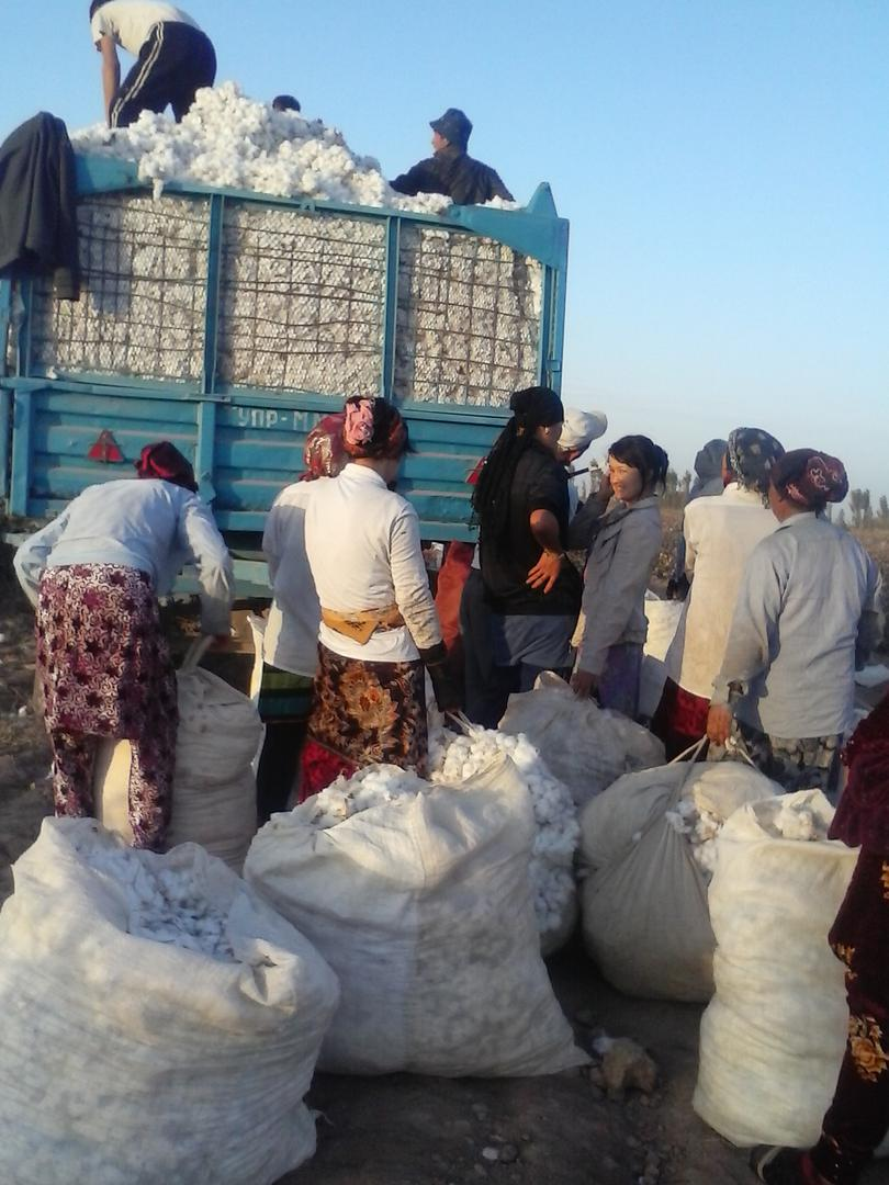 Women carrying bags of cotton to be weighed and loaded onto a truck in Jizzakh region during the 2016 cotton harvest. The government typically requires people to meet a daily quota of cotton picked, from which the costs of food and transport are deducted.