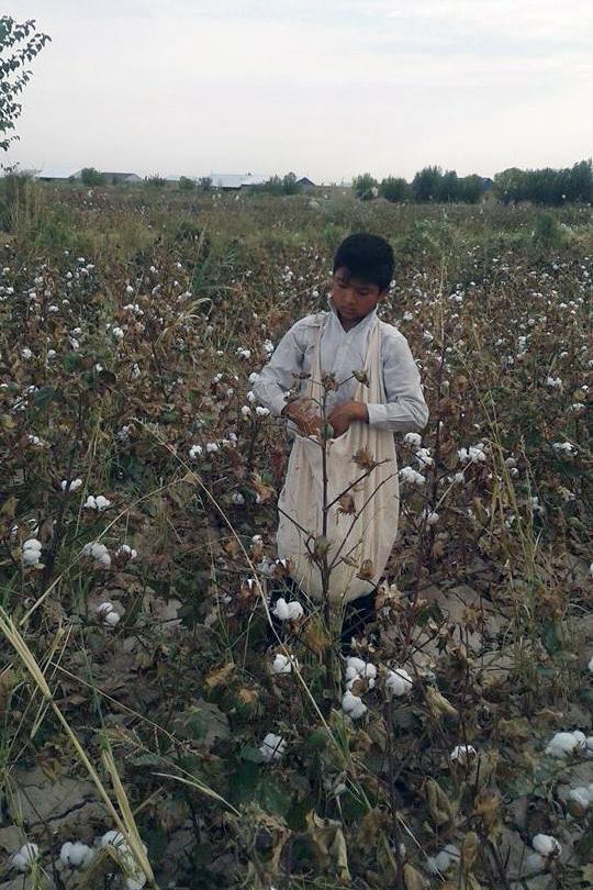 2016年收获季,在世界银行项目区域之一,卡拉卡尔帕克斯坦自治共和国艾利卡拉区,一名13岁男童被学校派来采摘棉花。在艾利卡拉,至少有两所学校下令13到14岁儿童在放学后下田采收棉花。