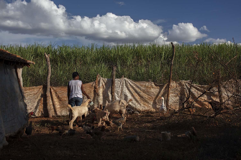 """Uiara, uma mulher de 50 e poucos anos vive no estado de Minas Gerais. Ela disse à Human Rights Watch que """"o avião sobrevoa nossas casas com o pulverizador ligado. Nós não esperamos, nós corremos para dentro das casas. Os agrotóxicos são muito fortes""""."""