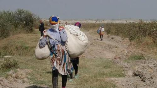 A woman wearing a scarf that covers her face walks down a farm road carrying heavy sacks filled with cotton.