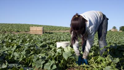 US: Adopt Stronger Laws for Child Farmworkers