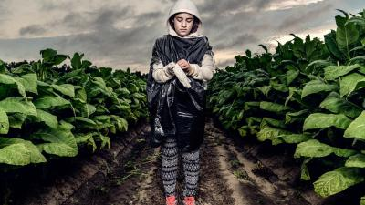 US: Tobacco Farms No Place for Teens