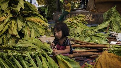 Indonesia: Child Tobacco Workers Suffer as Firms Profit