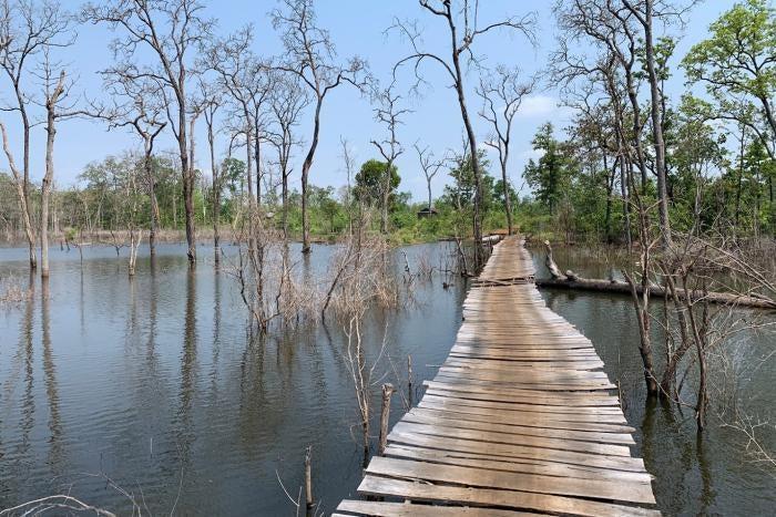 Makeshift wooden bridge constructed over water