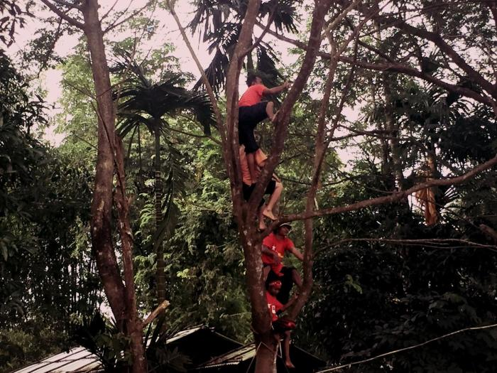 NLD supporters climb a tree to see the rally in Mandalay on October 28.