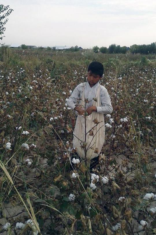 13-year-old boy picking cotton in a World Bank project area, Ellikkala, Karakalpakstan, under orders from his school during the 2016 harvest.