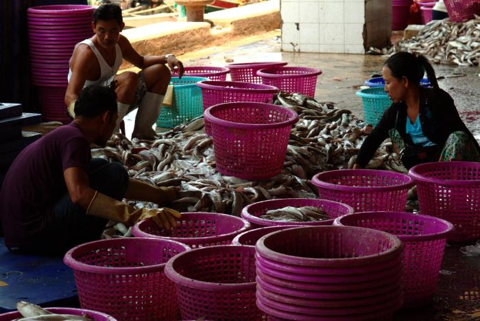 Burmese port workers sort fish in Ranong city, March 13, 2016.