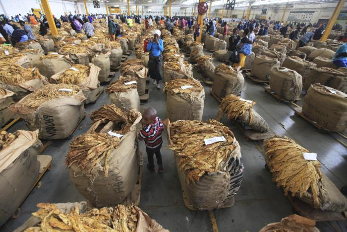 A child walks between bales of tobacco on an auction floor in Harare, Zimbabwe.