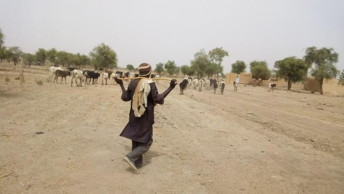 A Peuhl herder shepherds his cows in the Soum province of Burkina Faso.