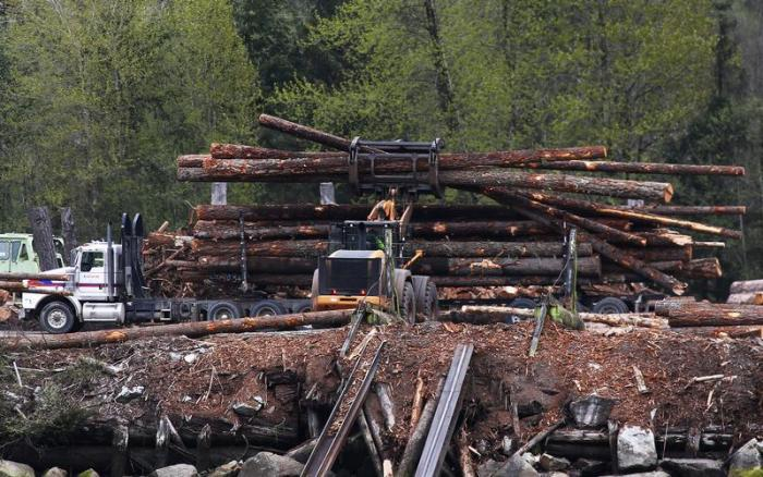 A workers unloads a truckload of logs in Howe Sound near Squamish, British Columbia, Canada April 25, 2017.