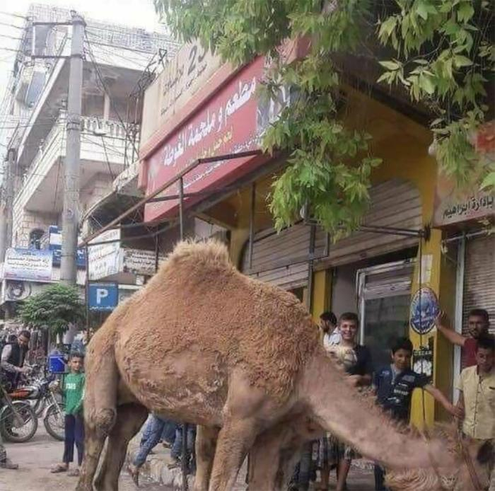 Camel in front of the Hussein's studio which was turned into a butcher shop. © 2018 Private