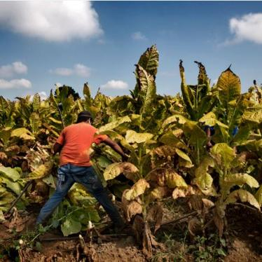 Tobacco Companies Commit to Protect Child Workers Worldwide