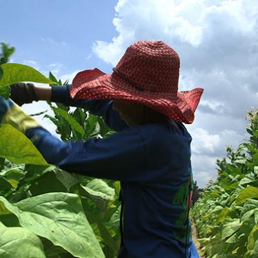 US: Tobacco Group Adopts Child Labor Protections