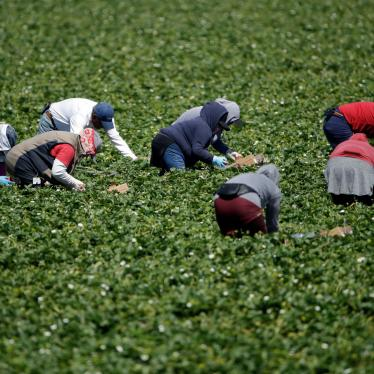 Farmworkers, considered essential workers under the current Covid-19 pandemic guidelines, work a strawberry field in Santa Paula, California, April 15, 2020.