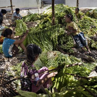 Children tie tobacco leaves onto sticks to prepare them for curing in East Lombok, West Nusa Tenggara.