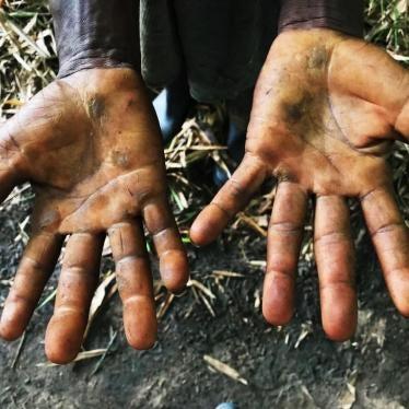 DR Kongo: Entwicklungsbanken verwickelt in Menschenrechtsverletzungen durch Palmölunternehmen
