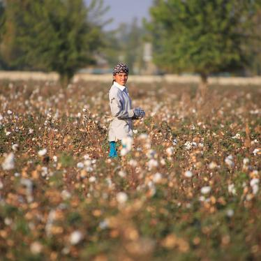 An Uzbekistan cotton grower works in a cotton plantation outside Tashkent, on October 24, 2019.